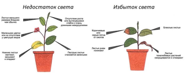 недостаток и избыток света для растений