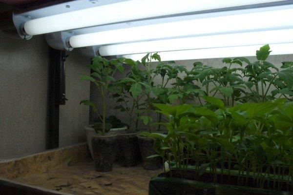Рис.2 – лампы для рассады.