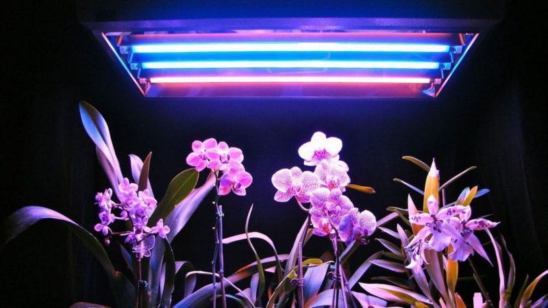 Выращивание растений под УФ элементом