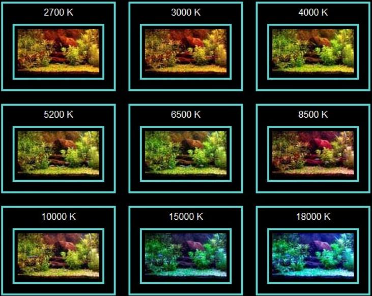 Цветовая температура сильно влияет на восприятие содержимого аквариума.