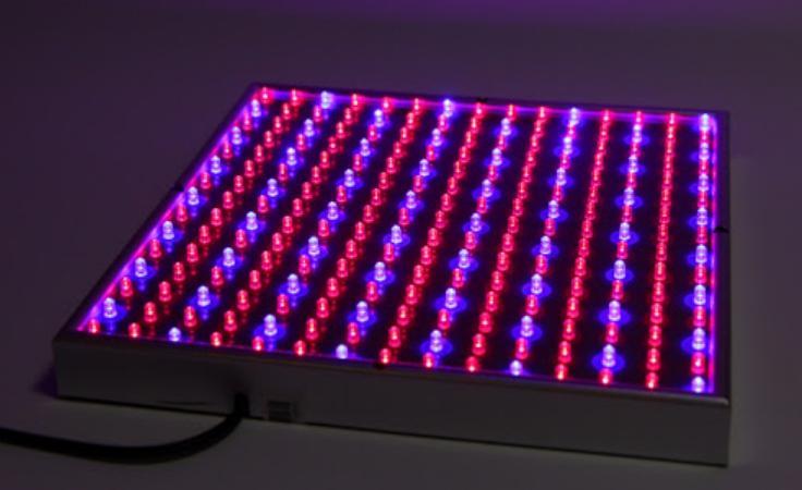 состоит из синих и красных светодиодов.