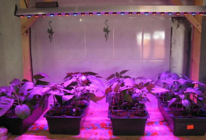 можно обеспечить растениям идеальные условия для роста