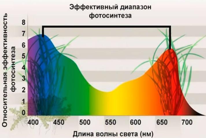 Эффективный диапазон для фотосинтеза растений.