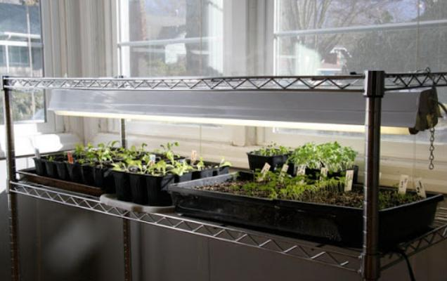 Особенности лампы для выращивания рассады в домашних условиях