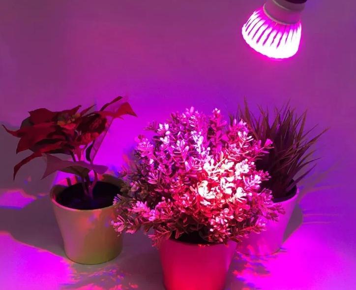 Фитолампу проще всего отличить по специфическому освещению.