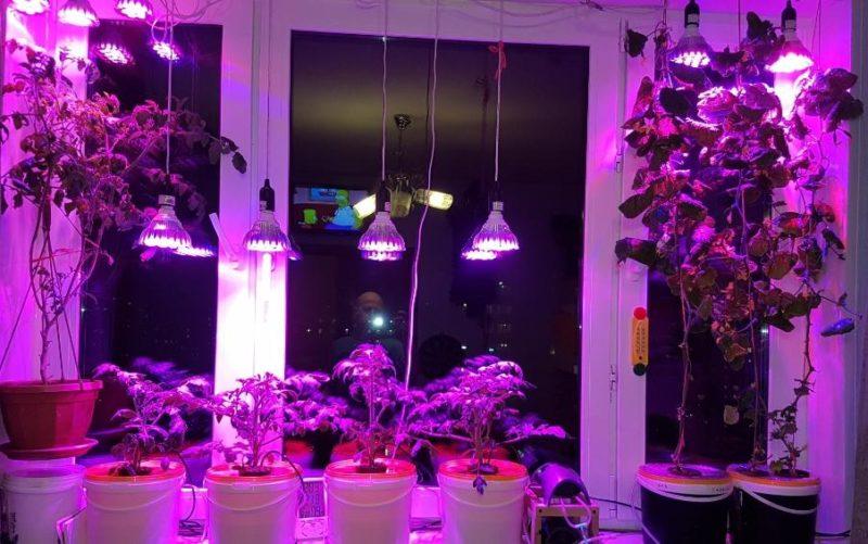Досвечивание на окне позволяет увеличить длину светового дня