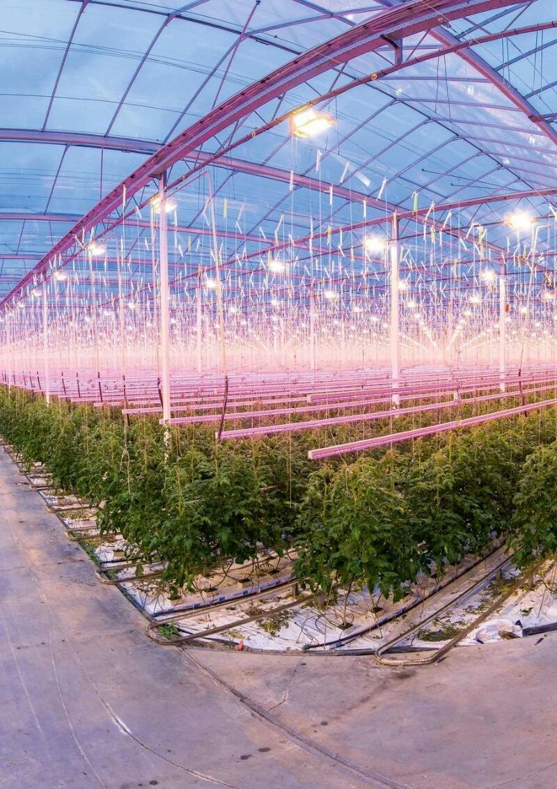 Имитация солнечного света для выращивания растений в теплицах.